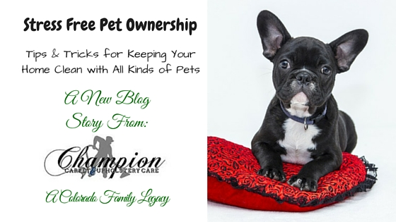 Stress Free Pet Ownership