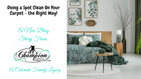 Doing a Spot Clean on Your Carpet - the Right Way!