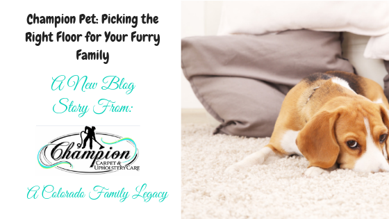 Champion Pet: Picking the Right Floor for Your Furry Family