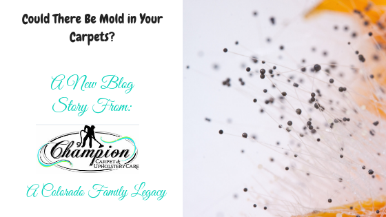 Could There Be Mold in Your Carpets?