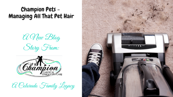 Champion Pets - Managing All That Pet Hair